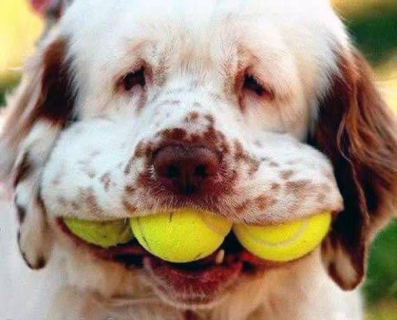 Веселые собаки