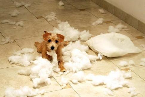 Собаки хулиганят