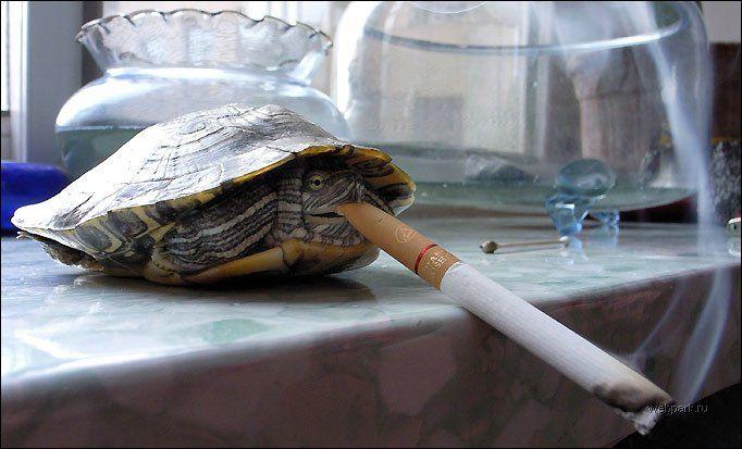 Черепаха обкурилась
