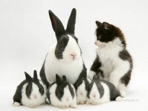 Кролики и котенок