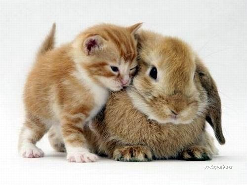Котенок и зайчик