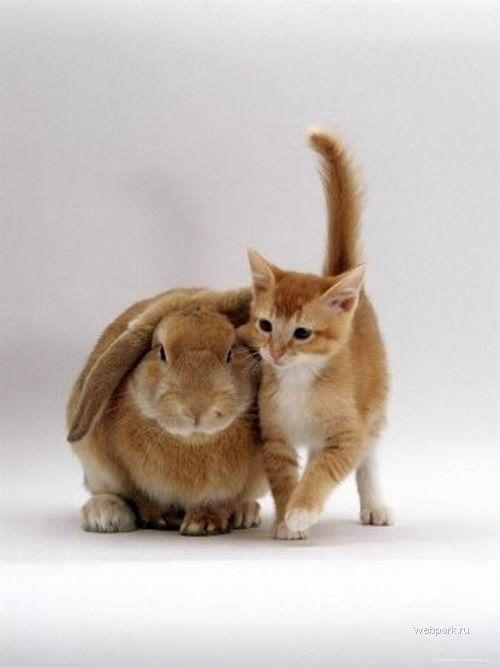 Еще один котенок и зайчик :)