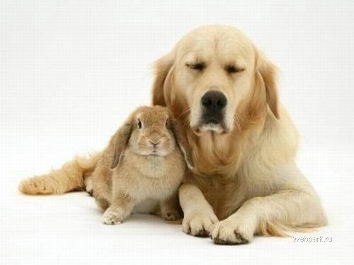 Кролик и собака
