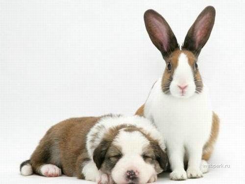 Кролик и щенок