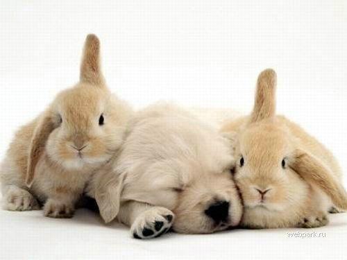 Щенок и два кролега