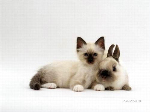 Кролик и котенок
