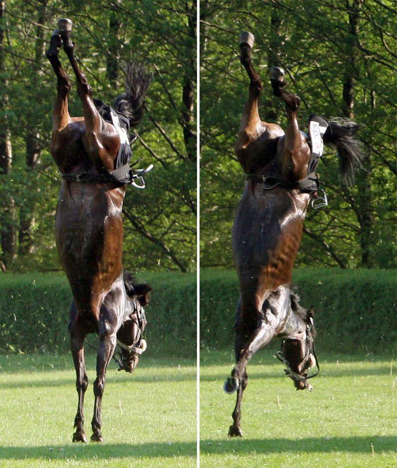 Лошадь - гимнастка