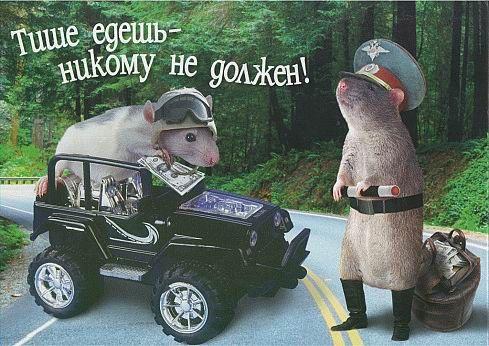 Мышь - гаишник