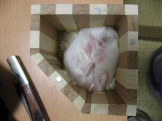 Мышонок спит