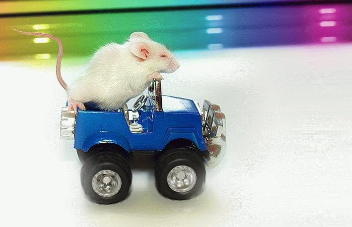 Мышь - автомобилист