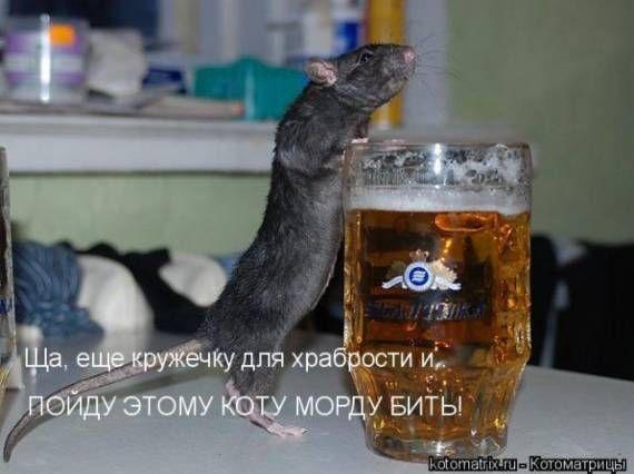 Пивка