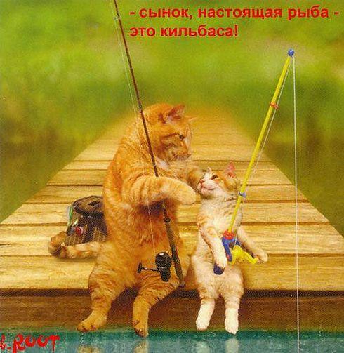 Хитрый кот -  рыболов