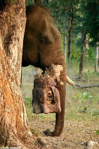 Слон с камерой