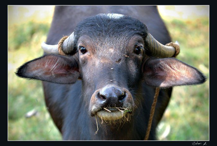 Прикольные фото животных