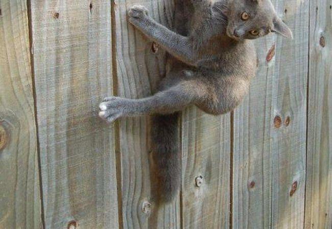 Кошачий попадос