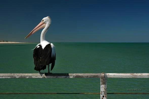 Прикольные птицы