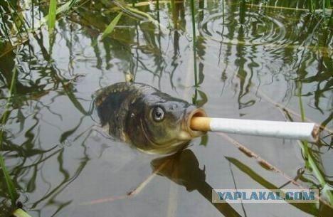 Курящая рыба