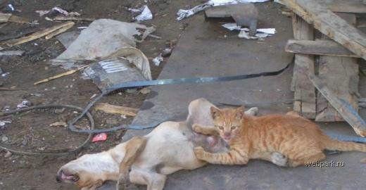 Секс между кошкой и собакой