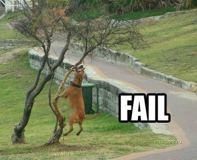 Собаки мочат коры