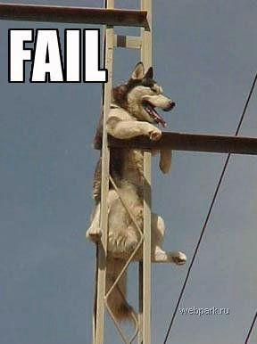 Собаки зажигают