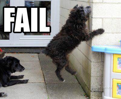 Собаки жгут