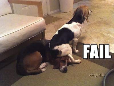 Собачьи приколы