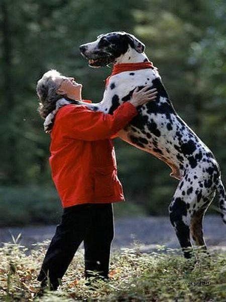 Супер собака