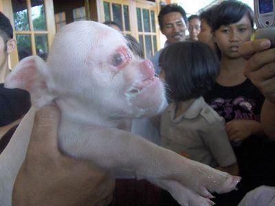 секс человека с животными: