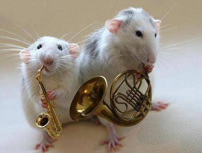 zhivhum-muzikant8.jpg